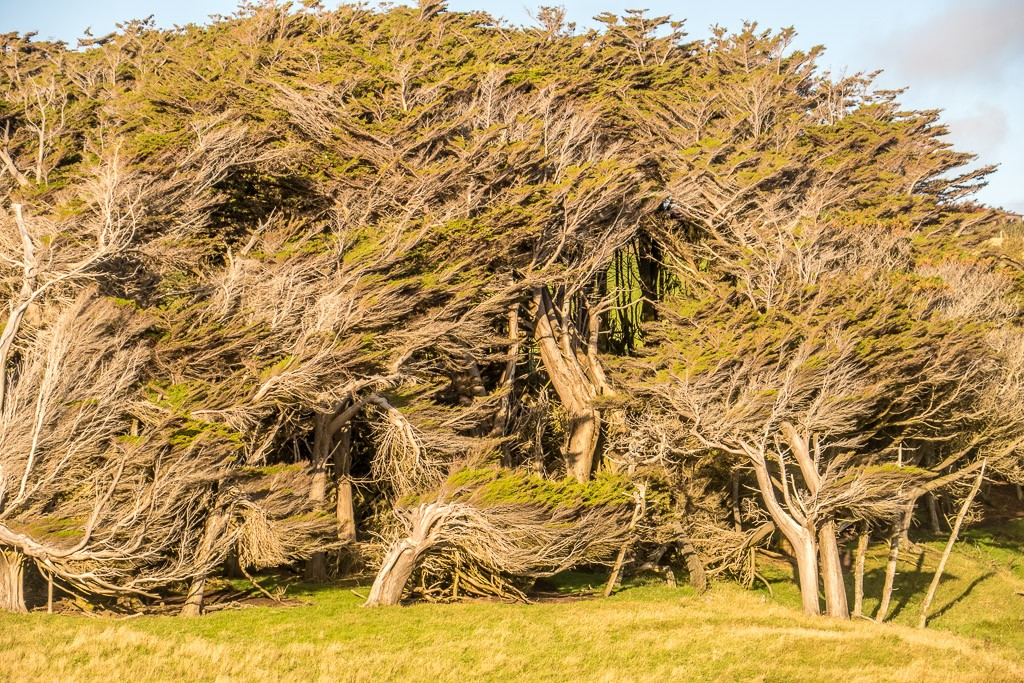 Windy, Slope Point, Southland, South Island, New Zealand