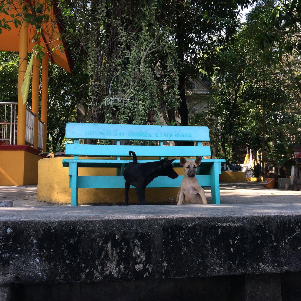 Guarding their bench, Bangkok, Thailand